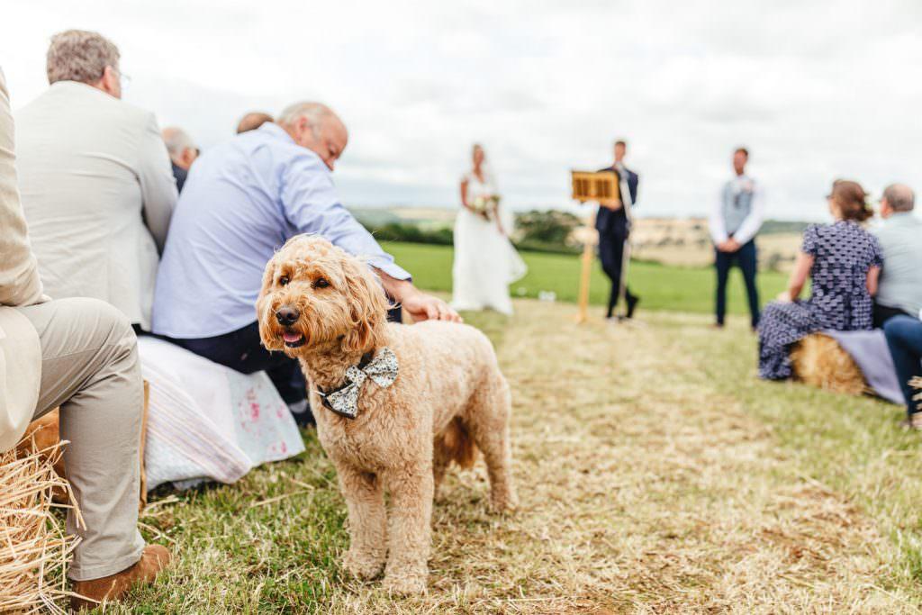 Oxford Humanist Wedding Ceremony. Dog at wedding ceremony